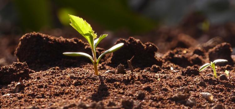 Seminate, seminate –  in ascolto di Padre Guglielmo