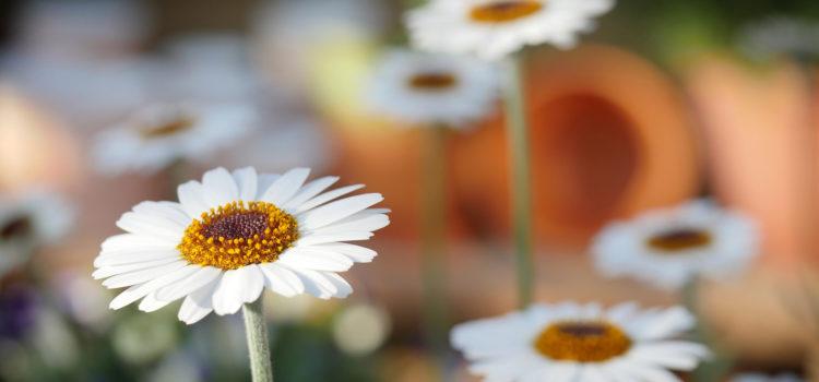 """Giaquinta e i """"fiori"""" del Carmelo"""